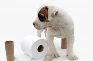 1351797395_puppy_toilet