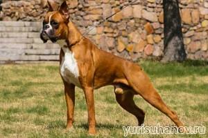 boxer-stoyka