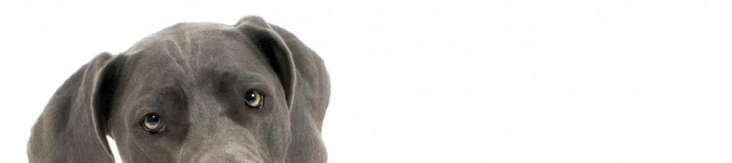 cropped-nemeckii-dog.jpg