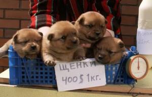 Выбор щенка. Рынок