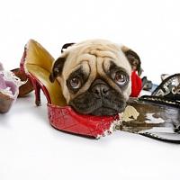 Как правильно наказывать щенка
