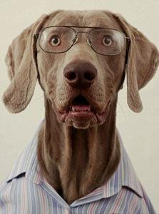 Очеловечивание собаки | Блог кинолога Юрия Суханова