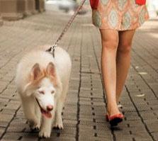 Социализация собаки. Прогулка