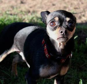 Социализация собаки. Не правильно наказанная собака.