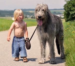 Собака для семьи. Вожак