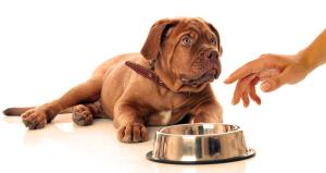 Собака для семьи. Еда