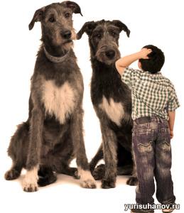 Гигантские породы собак