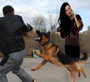 Собака-телохранитель в действии