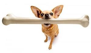 1332665230_dog-bone-feeding