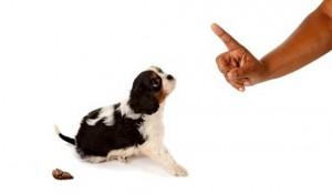 Dog-Punis