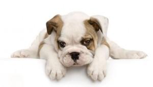 Выбор щенка. Где купить?