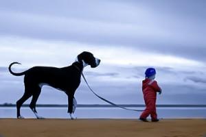Как научить щенка ходить на поводке