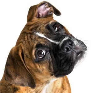 Правильное наказание щенка