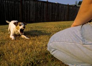 Отсутствие социализации у собаки