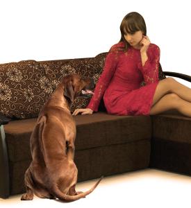 Собака для семьи. Можно ли на диван собаке?